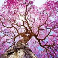 Aproveite a chegada da Primavera para colocar as mãos na terra!